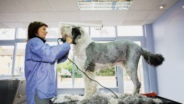 Professional Mobile Pet Grooming South East London
